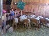 Les Moussaillons sont à la ferme