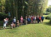 Des Bambous … partout !
