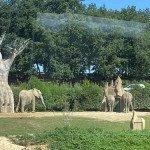 Au Zoo, les enfants émerveillés