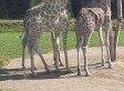 La grande sortie au Zoo